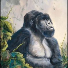 """""""The silverback gorilla is a beautiful animal. This one is pictured on a misty morning, leaves crisp and new. The sun will break through the clouds any moment and the jungle will wake. """" L. Curtin  """"Great Valentines Gift"""""""