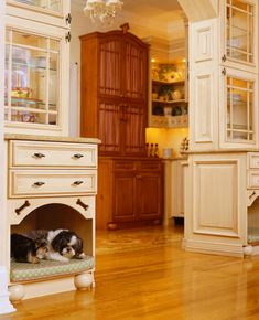 10 Creative Pet Living Accommodations | Shelterness