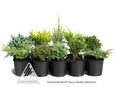 Fanciful Gardens® - Featured Packages for 2014