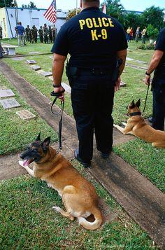 Honoring canine war heroes, FL