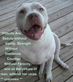 "Pitbulls Are... Beauty without Vanity, Strength without Insolence, Courage Without Ferocity, and all the virtues of man, without her vices..."" **Unknown**"