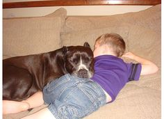 Look at that pitbull holding that child down against his will to use him as a pillow!