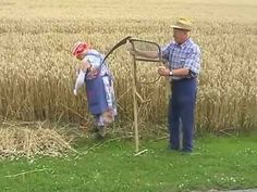 From seed to loaf (part 1 of 2) allotment scale production of bread making wheat - YouTube
