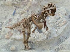 Stubby-Armed Dino