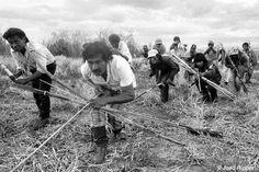 """Apretujados en minúsculas reservas y sufriendo consecuencias sociales devastadoras, muchos guaraníes han intentado recuperar pequeñas parcelas de su tierra ancestral. Los poderosos e implacables terratenientes que ahora ocupan sus tierras se han opuesto violentamente a estas """"retomadas""""."""