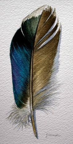 beautiful watercolour feather on paper