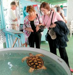 The Old Hegg Turtle Sanctuary is a popular spot on a round-island Bequia tour