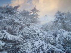 Winter wonderland, north Yorkshire, England. Photograph: Joe Cornish