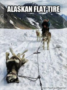 alaskan-flat-tire-sled-dog-mb