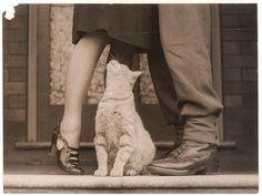 cats love love