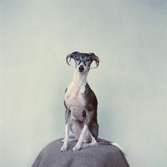 {geek chic dog} photo by sincerelyhana.com