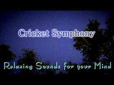 Nature Sounds for Relaxing, Meditation & Sleep...Night Time Crickets
