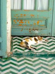 the doors, floors, tile patterns, colors, green, calico cats, bathroom, flooring, chevron
