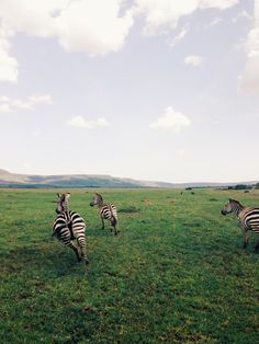 Zebras | VSCO Journa