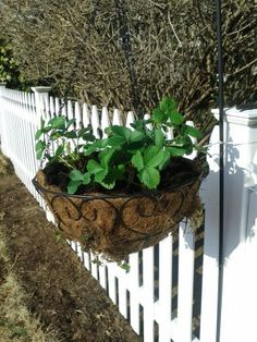 DIY Hanging Strawberry Planter « Learning As I Go