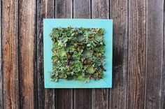 20 x 20 Handmade Cedar Living Wall Distressed by OneWithPlants, $160.00