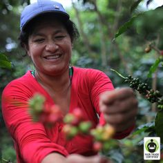 #DidYouKnow that #Peru is the largest producing country of #FairTrade Certified #coffee? Click 'like' if you're grateful for all the hard work that goes into making your coffee & learn more here: http://fairtrd.us/1i9yhZ4