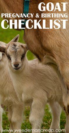 Goat Pregnancy & Birthing Checklist
