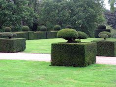 Ancient Yew hedges - beautifully tended