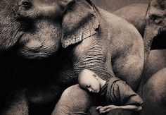 Gregory Colbert's Ashes and Snow