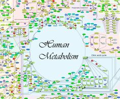 A Google map of the human body