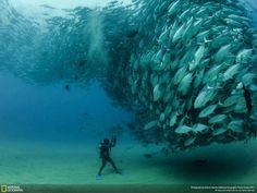 Photographer | Octavio Aburto (National Geographic )  Place : Cabo Pulmo, Baja California Sur, Mexico