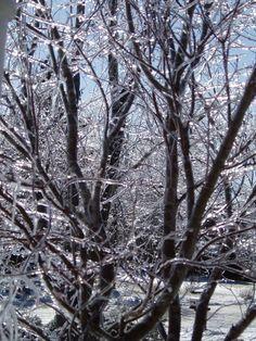 Long Island Ice Storm (2)