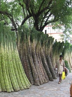 Sugar Cane for sale on a footpath in Kolkata, India.