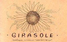 Girasole = Sunflower
