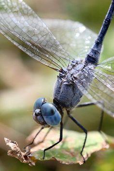 Dragonfly / Flickr - Photo Sharing!