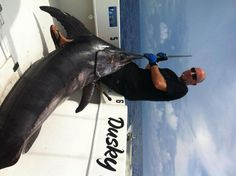 Big sword fish with Bouncers Dusky fishing charter