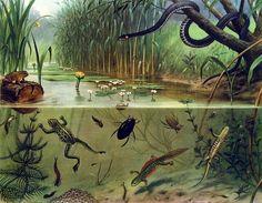 Google Afbeeldingen resultaat voor http://www.joopmarkerink.nl/koudwateraquarium/plaatjes/schoolplaat1.jpg