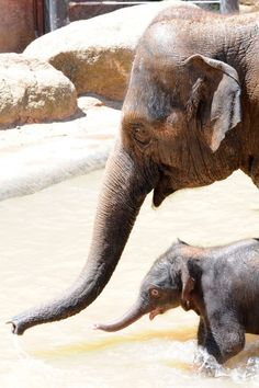 Mother love  A MOTHERS LOVE  Pinterest  Animals Cute