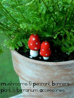 clay, party games, mini mushroom, fairi garden, potted plants, accessori, minis, mushrooms, banners
