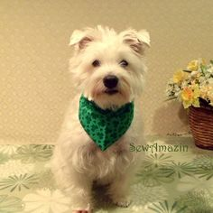 This pin is now closed - a winner has been selected for this round. Swirling Shamrocks Bandana Dog Collar Cover
