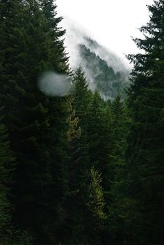 mountains & woods.