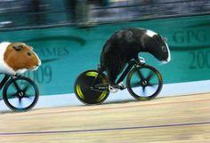 GP Olympics