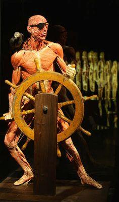 A pirate from Body Worlds exhibit by Gunther von Hagens... #gunthervonhagens #bodyworlds #plastination