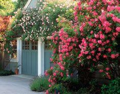 I LOVE flowering vines over garage doors