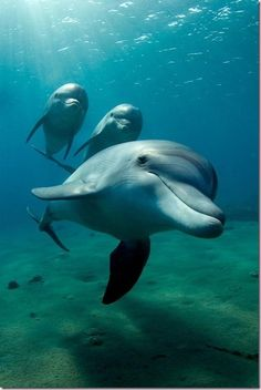Smiling dolphin trio.