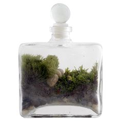 gift, idea, twigterrarium, terrarium kit, diy terrarium, twig terrarium, diy kit, garden, thing