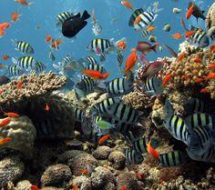 beautiful Aquatic creatures - Bing Images
