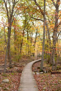 Pathway around Walden Pond through Fall Foliage in Concord, Massachusetts