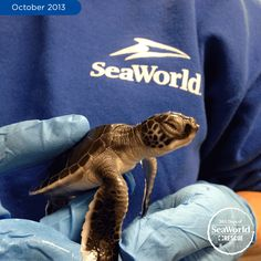 A rescuer lends a helping hand to one of our tiniest patients – an endangered baby green sea turtle. #365DaysOfRescue