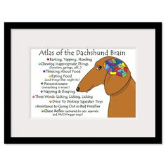 Dachshund Brain Atlas  - Not sure I've ever read anything more true!