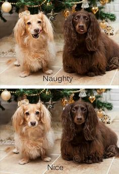 via I Love Dachshunds