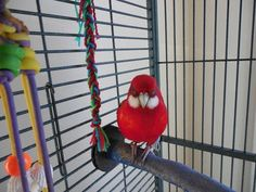 Homemade #BirdToy (How to)