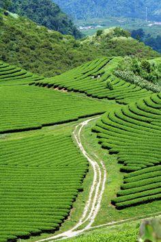 Green heaven in Vietnam :)