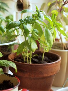 Growing Produce in an Indoor Garden