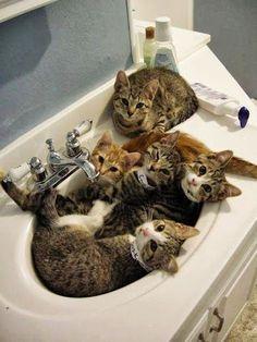 Bowl Full o' Kitties
